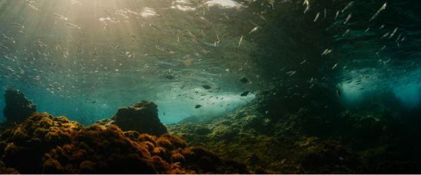 evolution fonds marins