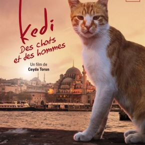 En bref : KEDI, DES CHATS ET DES HOMMES de CeydaTorun
